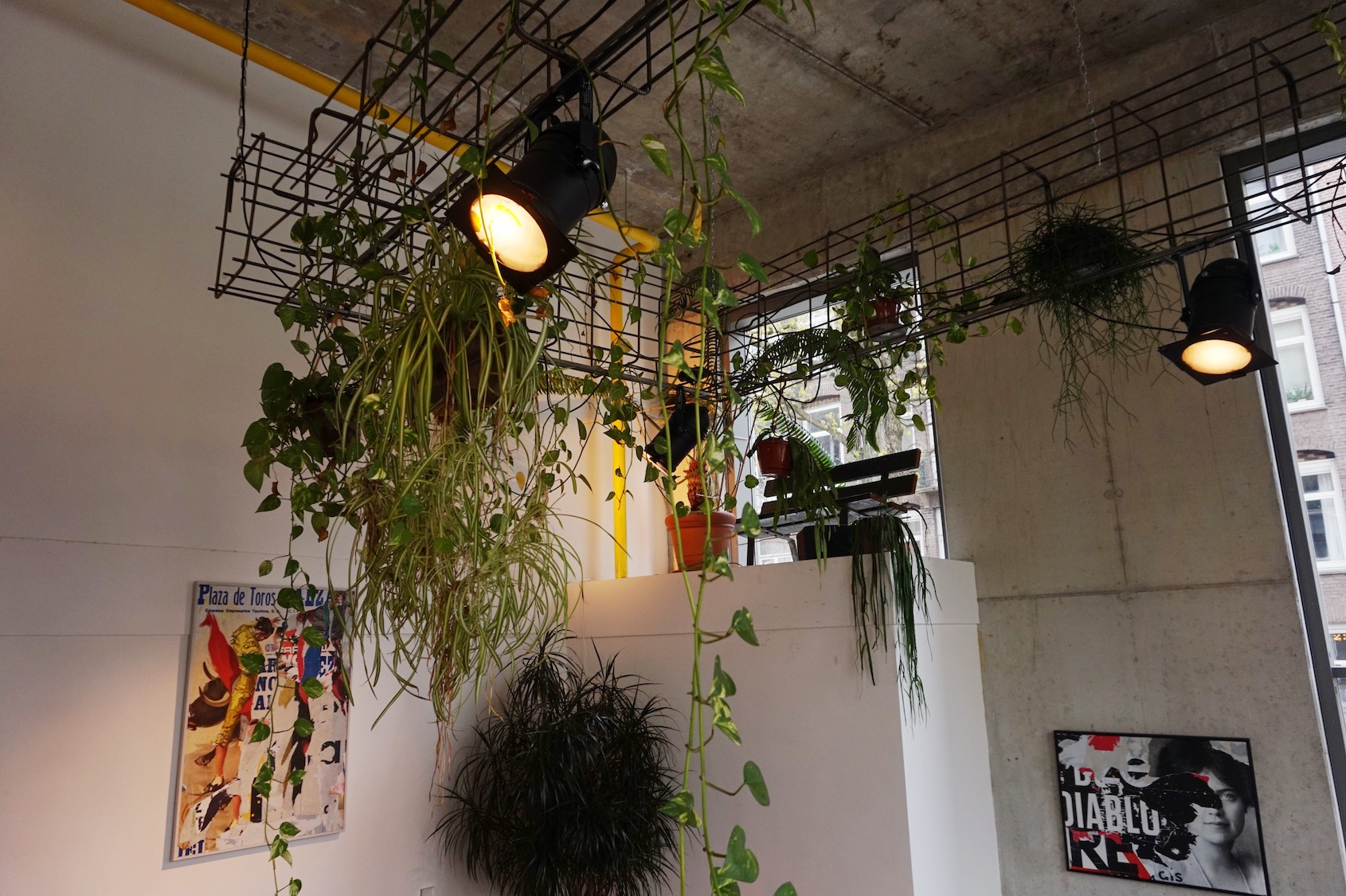 Benji's planten